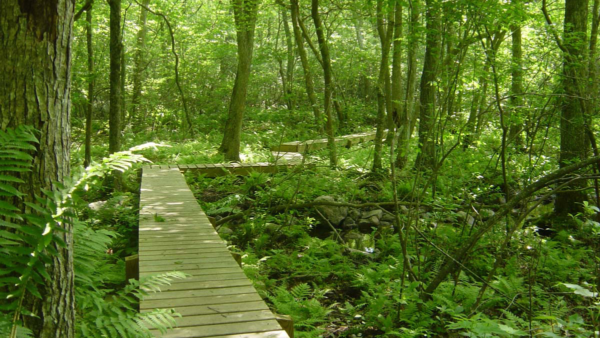 Dartmouth nature reserve.
