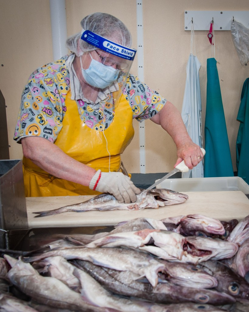 Seafood plant worker wearing hairnet, yellow rubber smock, face mask and shield, fillets fish.