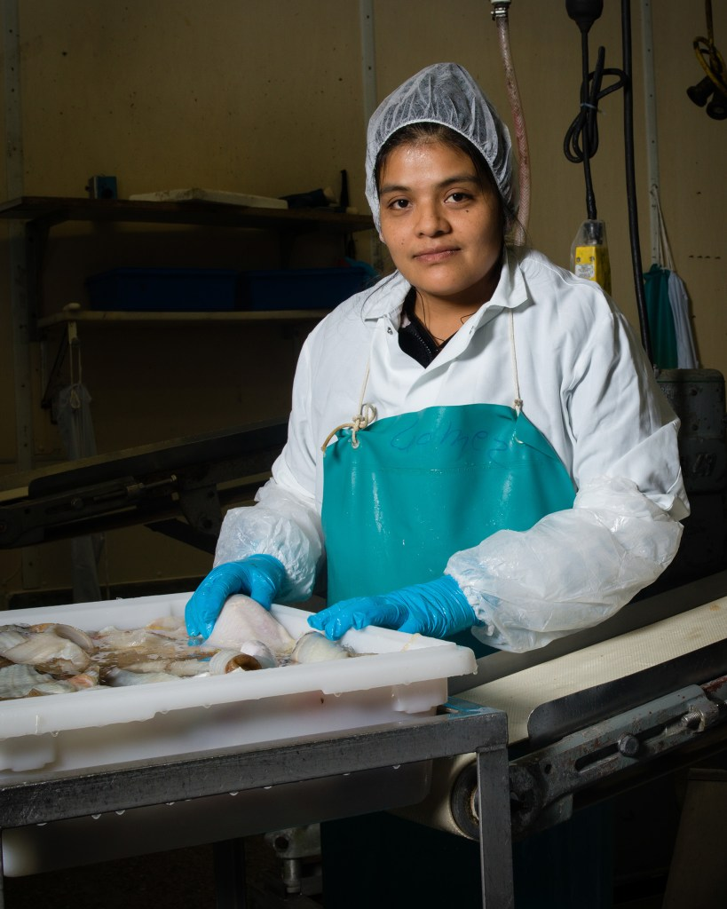 Skinning machine operator Maria Gomez at fish plant wearing hairnet and rubber smock.